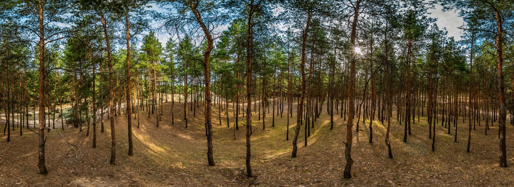 Цюрупинский лес